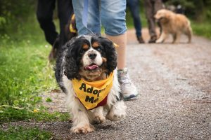 Another Successful Dog Walk for The Frontier Animal Society!
